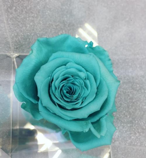 VIP *Неувядающая Роза* № 13