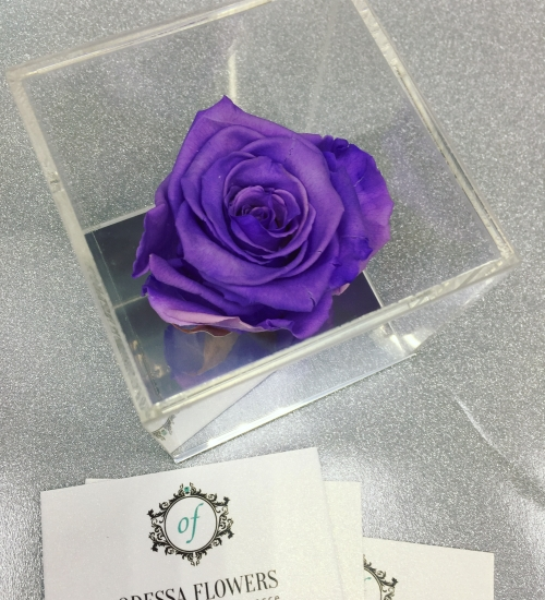 VIP *Неувядающая Роза* № 1