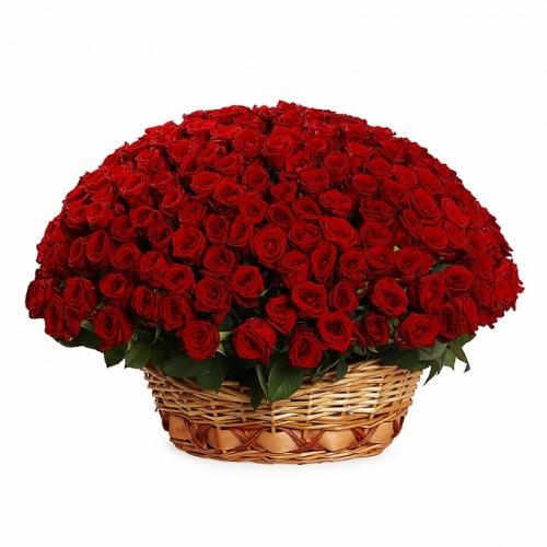 Корзина *Красная Роза* 251 шт
