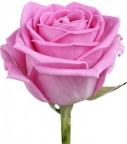 Роза *Розовая* 1 шт