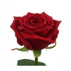 Роза *Красная* 1 шт