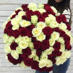 Букет Роз *Красно-белая роза* 101 шт