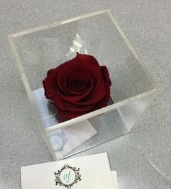 VIP *Неувядающая Роза* № 2